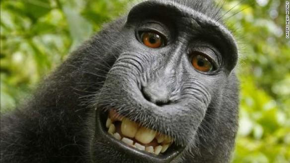 140808122043-01-selfie-monkey-0808-story-top