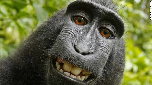 140808122043-01-selfie-monkey-0808-story-top